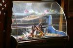 Стъклена хладилна витрина с извито стъкло за торти по поръчка